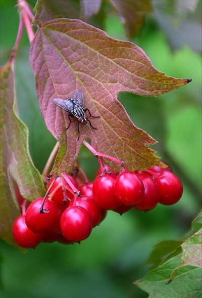 Борьба с мухами осенью